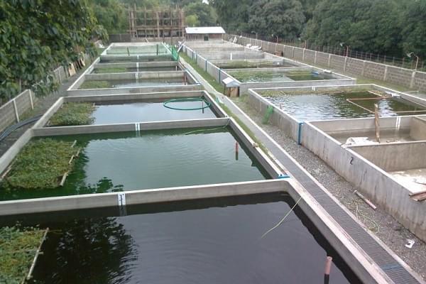 Bể nuôi cá xi măng cũng có nhiều hạn chế