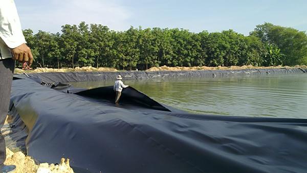 Bạt chống thấm HDPE được sử dụng để lót hồ nuôi thủy hải sản